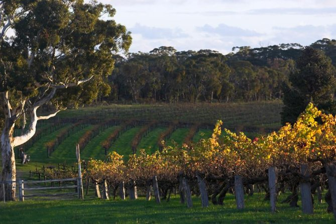 Barossa Valley with Hahndorf Tour from Adelaide - Attractions