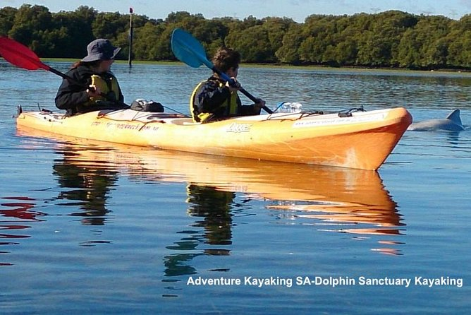 Dolphin Sanctuary and Ships Graveyard Kayak Tour - Attractions