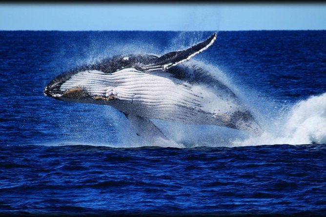 Whale Watching Cruise from Redcliffe Brisbane or the Sunshine Coast - Attractions