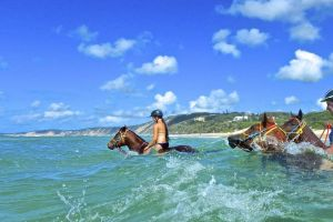 Horse Swimming Ride from Rainbow Beach - Attractions