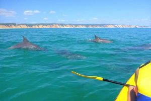 Half-Day Kayak with Dolphins and 4WD Beach Drive from Rainbow Beach - Attractions