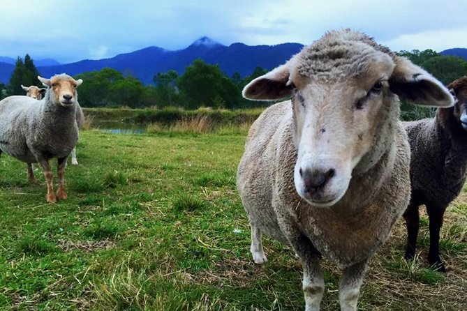 Trevena Glen Farm Animal Experience - Attractions