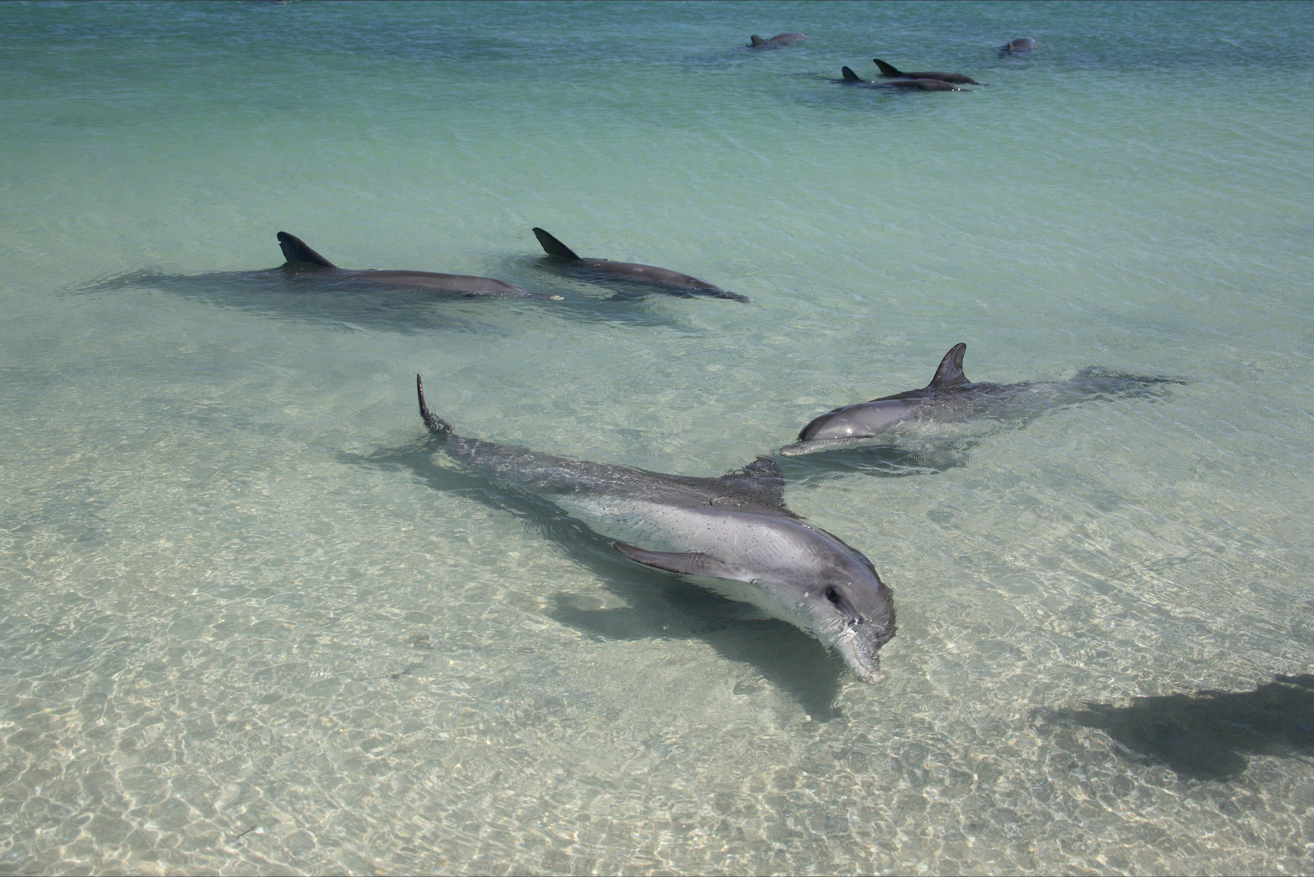 Dolphins of Monkey Mia - Attractions
