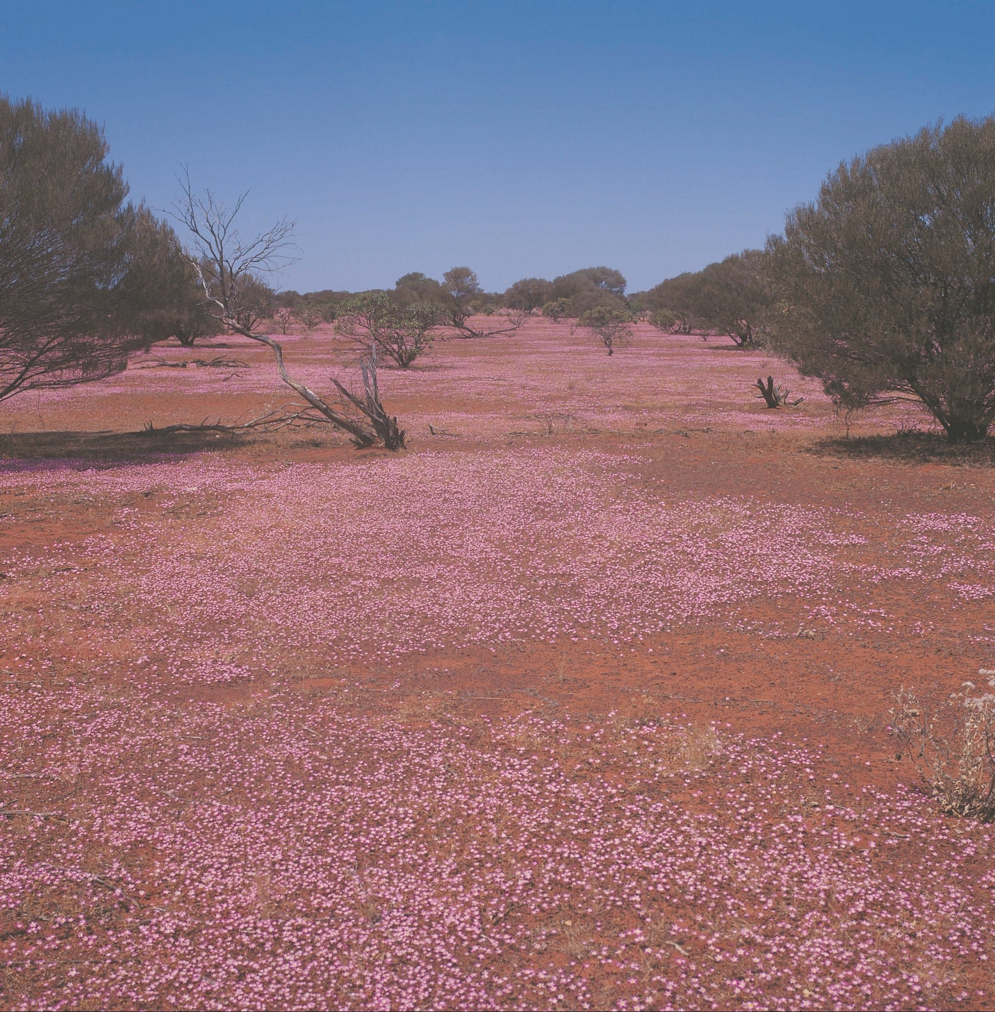 Meekatharra - Attractions