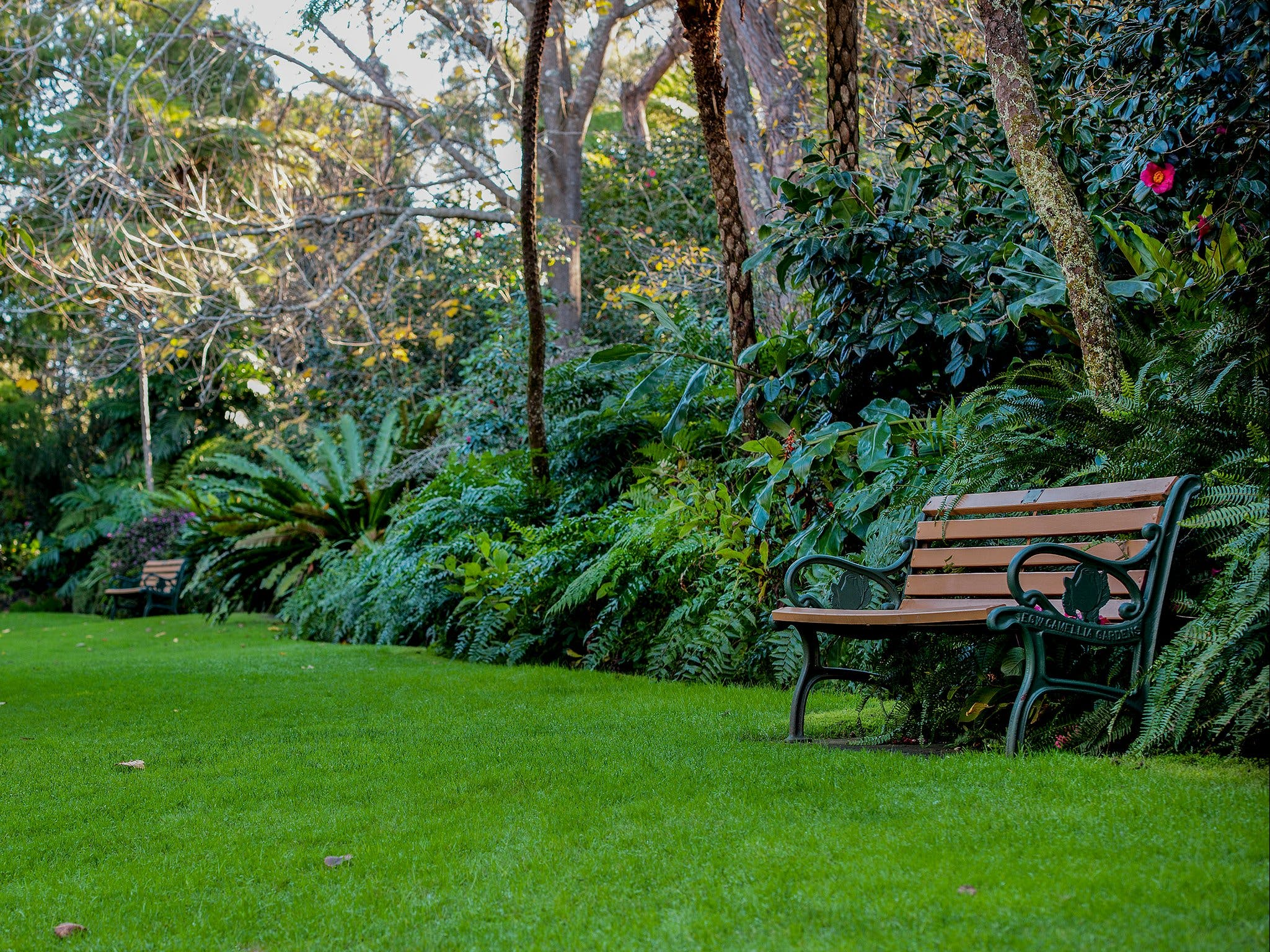 EG Waterhouse National Camellia Gardens - Attractions