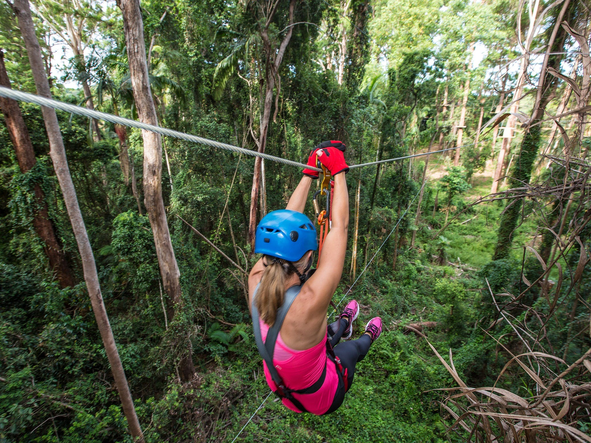 TreeTop Challenge - Sunshine Coast - Attractions