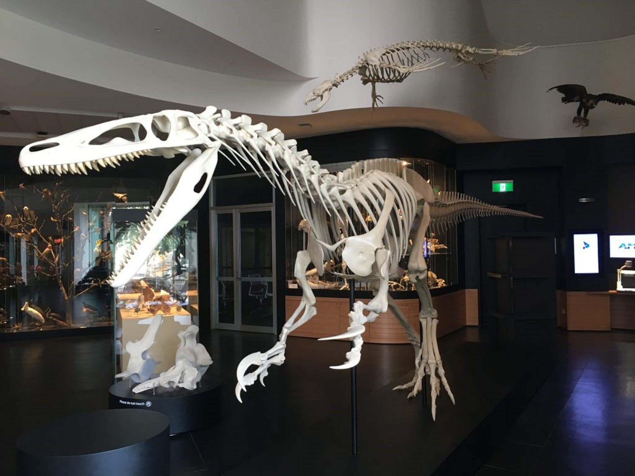 UNE Natural History Museum - Attractions