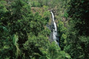 Mapleton Falls National Park - Attractions