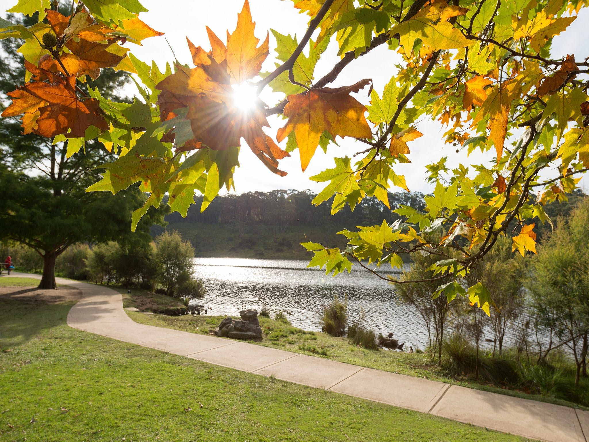 Wentworth Falls Lake - Attractions