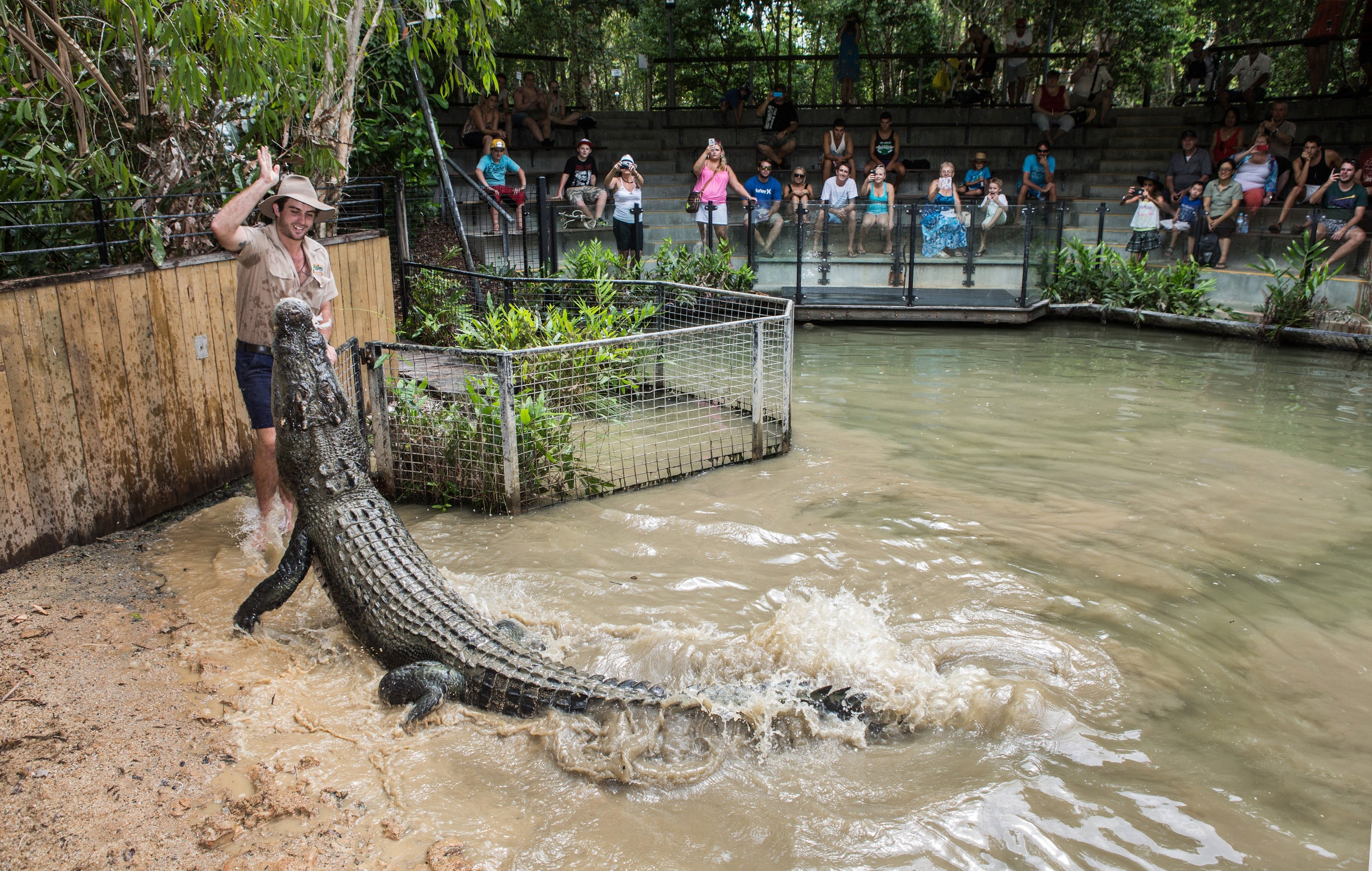 Hartley's Crocodile Adventures - Attractions
