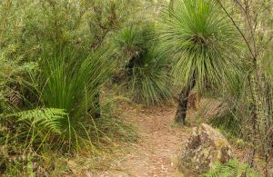 Grass Tree Circuit - Attractions