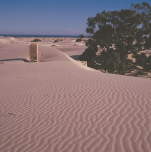 Nullarbor Plain - Attractions