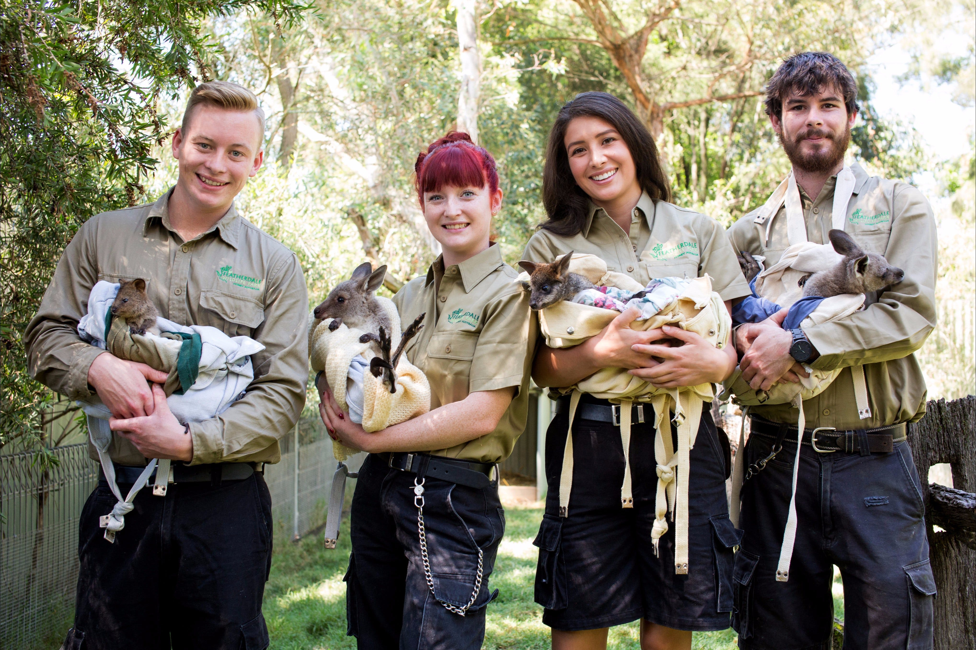 Featherdale Wildlife Park - Attractions