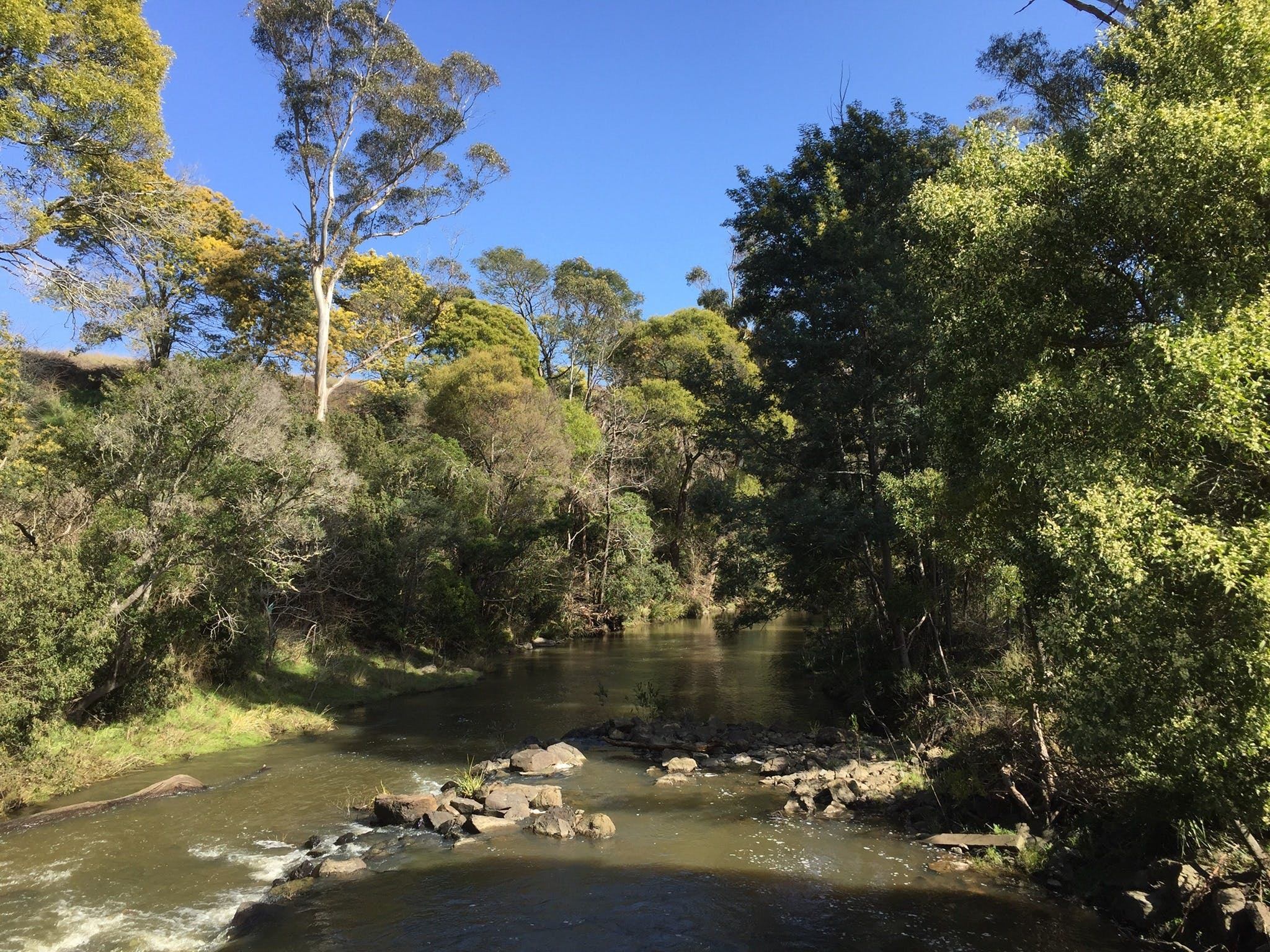 Pipers River Board Walk - Attractions