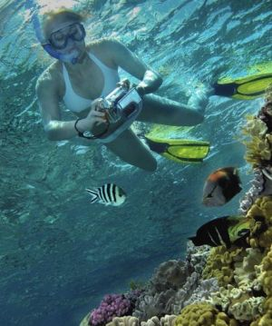 Calypso Reef Charters - Attractions
