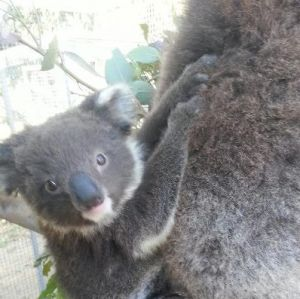 West Oz Wildlife Petting Zoos - Attractions